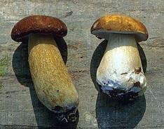 پاورپوینت بررسی پرورش قارچ